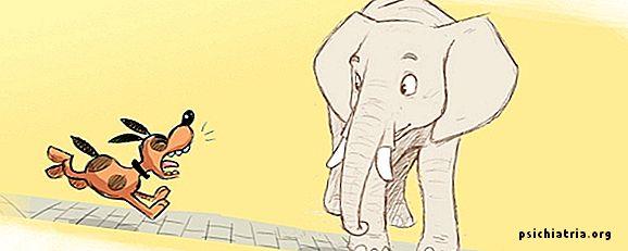 Слон и моська картинки простым карандашом